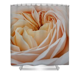Shower Curtain featuring the photograph Rose Blush by Sabine Edrissi