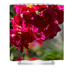 Rose Bouquet Shower Curtain by Michele Myers
