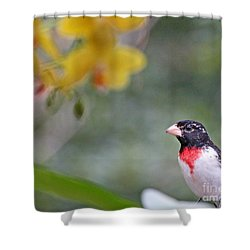 Rose Breasted Grosbeak Photo Shower Curtain