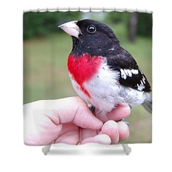 Shower Curtain featuring the photograph Rose Breasted by Mim White