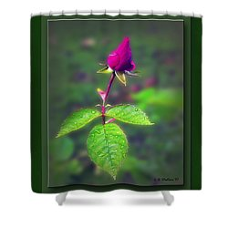 Rose Bud Shower Curtain by Brian Wallace