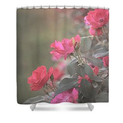 Rose Bush Shower Curtain