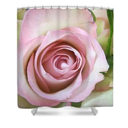 Rose Dream Shower Curtain