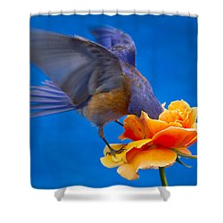 Rose Excavation Shower Curtain