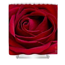 Eye Of The Rose Shower Curtain by Nick  Boren