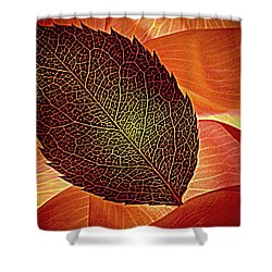 Rose Foliage On Rose Petals Shower Curtain by Chris Berry