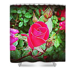 Rose Garden Centerpiece 2 Shower Curtain