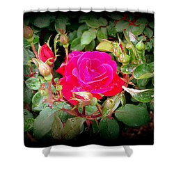 Rose Garden Centerpiece Shower Curtain