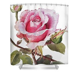 Pink Rose Grace Shower Curtain by Greta Corens