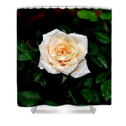 Shower Curtain featuring the photograph Rose In The Rain by Deena Stoddard