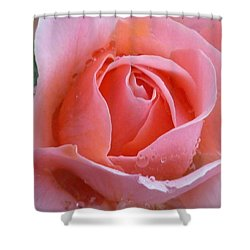 Shower Curtain featuring the photograph Rose In The Rain by Lingfai Leung