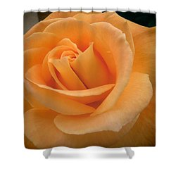 Rose Shower Curtain by Laurel Powell
