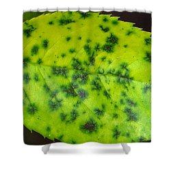 Rose Leaf Shower Curtain by Sonali Gangane