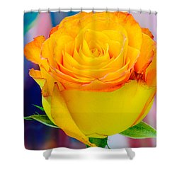 Yellow Rose Macro Shower Curtain
