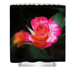 Rose Mardi Gras Shower Curtain by Rona Black