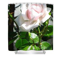 Rose Named Pearl Shower Curtain by Sonali Gangane