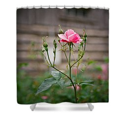 Rose Of Independence Shower Curtain by Linda Unger