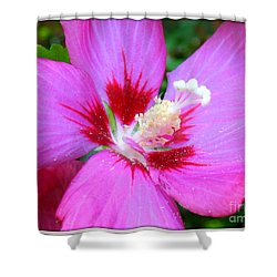 Rose Of Sharon Hibiscus Shower Curtain by Patti Whitten
