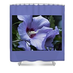 Rose Of Sharon Shower Curtain by Rebecca Samler