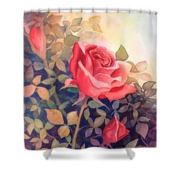 Rose On A Warm Day Shower Curtain by Marilyn Jacobson
