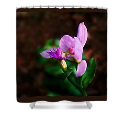 Rose Pogonia Orchid Shower Curtain by William Tanneberger