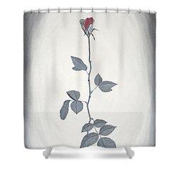 Rose Shower Curtain by Sven Fischer