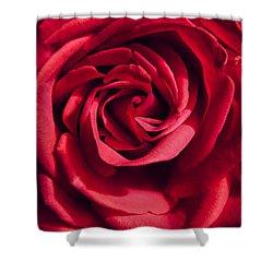 Shower Curtain featuring the photograph Rose Triad I by John Hansen