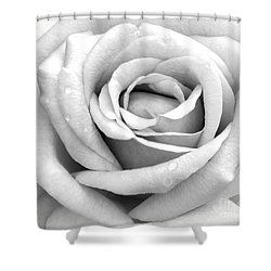 Rose With Tears Shower Curtain by Sabrina L Ryan