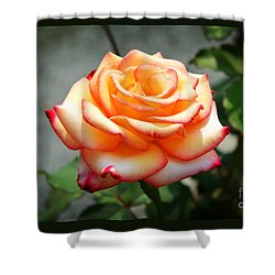 Rose Yellow And Red Shower Curtain by Joseph J Stevens