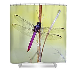 Roseate Skimmer Dragonfly Shower Curtain