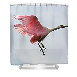 Roseate Spoonbill In Flight Shower Curtain by Carol Groenen