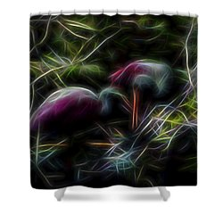 Roseate Spoonbills 2 Shower Curtain by William Horden