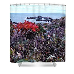 Shower Curtain featuring the photograph Rosehip by Mim White