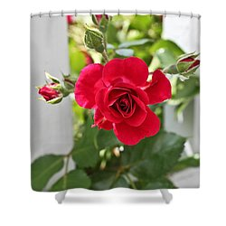 Shower Curtain featuring the photograph Roses Are Red by Joann Copeland-Paul