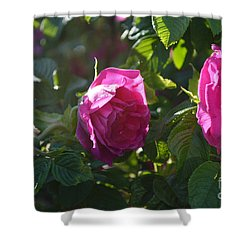 Roses At Sunrise Shower Curtain by Alys Caviness-Gober