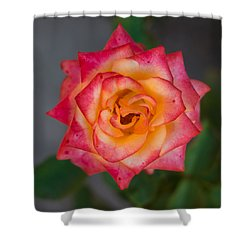 Roses From My Garden Shower Curtain