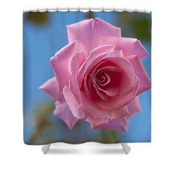 Roses In The Sky Shower Curtain by Miguel Winterpacht