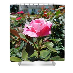 Roses Near A Country House Shower Curtain by Eloise Schneider