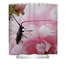 Rosey Antenna Reception Shower Curtain