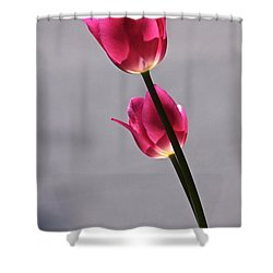 Rosy Loveliness For A Gray Day Shower Curtain by Byron Varvarigos