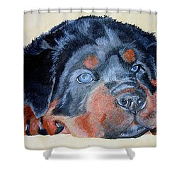 Shower Curtain featuring the painting Rottweiler Puppy Portrait by Tracey Harrington-Simpson