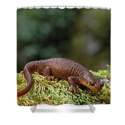Rough-skinned Newt Oregon Shower Curtain by Gerry Ellis