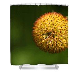 Round Flower Shower Curtain by Karol Livote