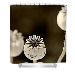 Round Hendecagon  Shower Curtain by Melinda Ledsome