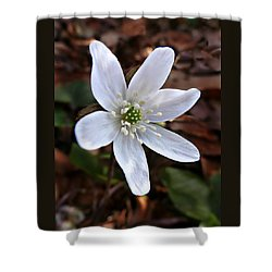 Shower Curtain featuring the photograph Wild Round-lobe Hepatica by William Tanneberger