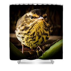 Round Warbler Shower Curtain