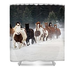 Roundup Shower Curtain