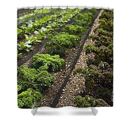Rows Of Kale Shower Curtain by Anne Gilbert
