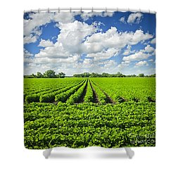 Rows Of Soy Plants In Field Shower Curtain
