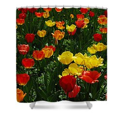 Rows Of Tulips Shower Curtain by Kathleen Struckle